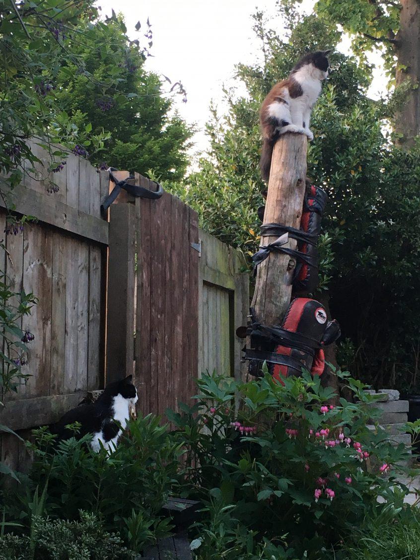 Kick Tree with cats