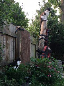 Kick Tree - The ninja cats!